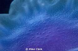abstract jellyfish by Mike Clark